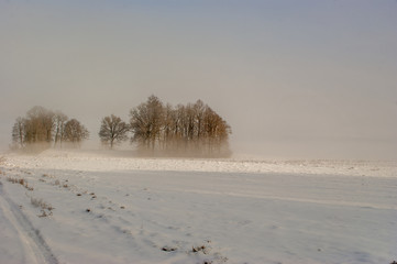 Snowy field with tire track and group of bare trees in distance