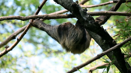 Monkey hanging from tree branches