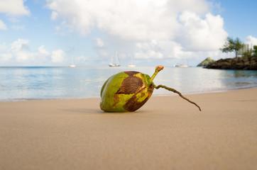 St Lucia, Coconut on sandy beach
