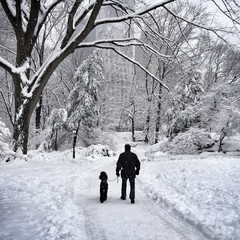 USA, New York, New York City, Man and his dog walking in Central Park in winter