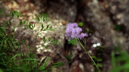Close up of flower blossom