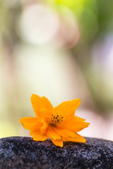 Indonesia, Padang, Yellow Flower