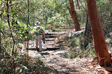 Australia, Nuovo Galles del Sud, Sydney, Man walking in forest
