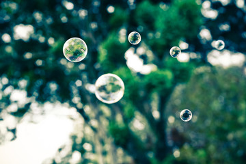 Close-up of bubbles against tree