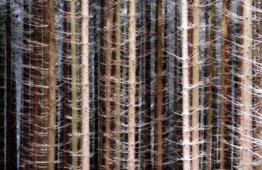 Germany, Regierungsbezirk Darmstadt, Hesse, Hochtaunuskreis, Timber trees in winter