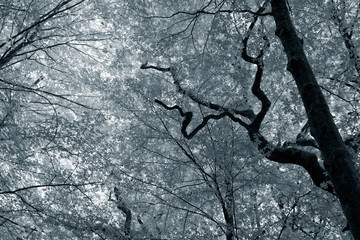 Infrared deep forest
