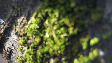 Close up of moss on the tree.