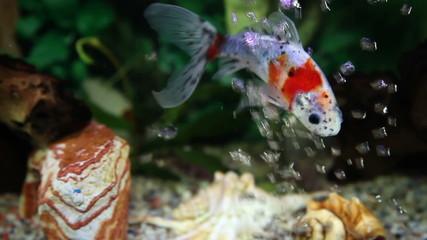 Close up shot of a  fish tank