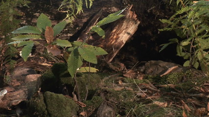 Shot of the tree trunk