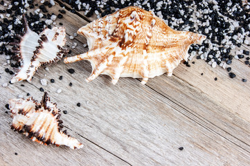 seashells on a wooden background