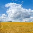 Stoppelfeld mit aufziehenden Wolken