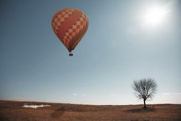 Air balloon and tree