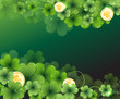 Gold coins and clover