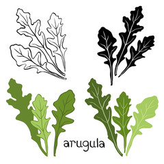 Set of arugula  isolated on white background. Hand drawn vector