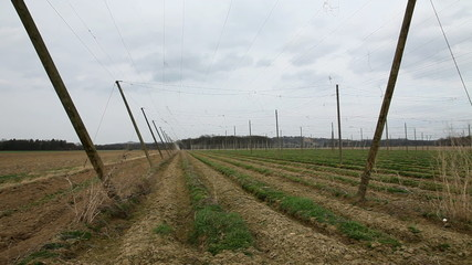 Shot of an abandoned field for hops where now grass is growing