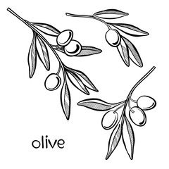 Set of olive branch  isolated on white background. Hand drawn ve