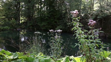 Panoramic shot of some flowers in Plitvice national park