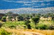 Afrcan landscape