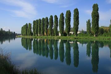 Pioppi sul fiume Mincio