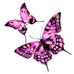 butterfly449