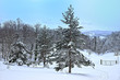 Winter im Wald