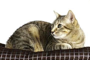 closeup of a cute kitten