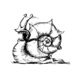 Sketch of snail, vector illustration - 77464892