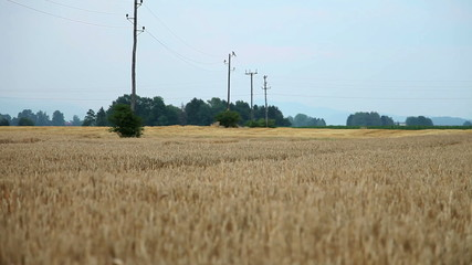 Shot of a countryside field of grain