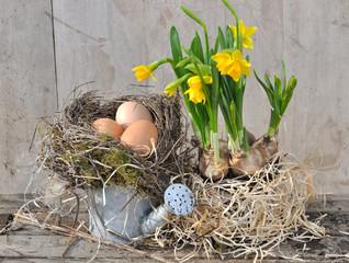 œufs dans nid  et narcisses