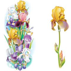 Garlands of Iris flowers