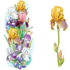 Garlands of Iris flowers