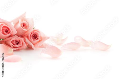 Foto op Plexiglas Roses Pink Roses and petals