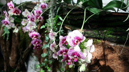 Beautiful blossoming orchids in forest