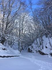 sentiero nella neve