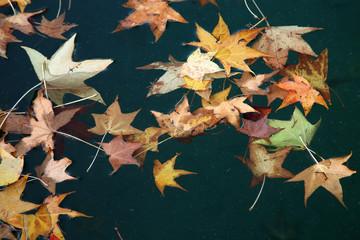 autunno caduta foglie