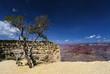 Trailview overlook im Grand Canyon in Arizona, USA