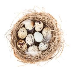 Quail eggs nest