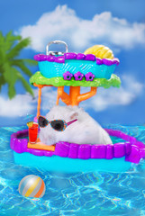 hamster on summer holidays