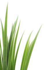 green grass leaves
