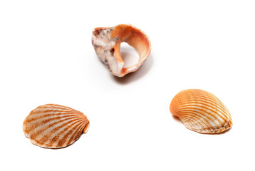 Seashells and broken rapana isolated on white background