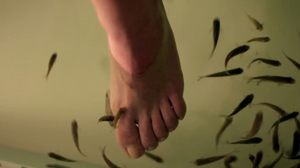 close up shoot of feet being cleaned by small fishes in aquarium
