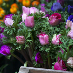 set of pink and blue anemone flowers in vase on table close upse