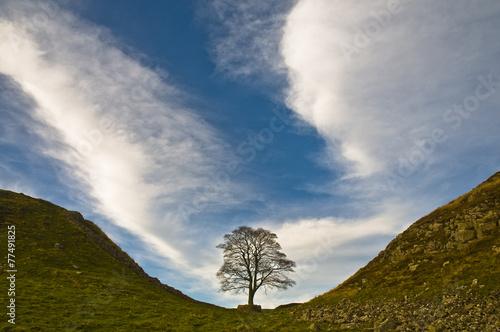 Foto Spatwand Heuvel Sycamore Gap, Hadrian's Wall