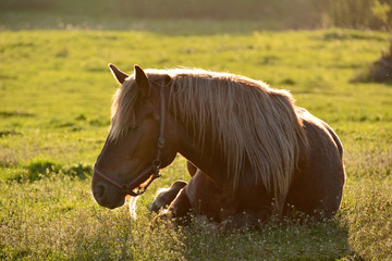Horse on meadow in the rays of the setting sun