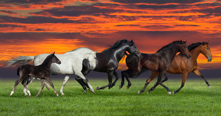 Group of five horses run gallop on gree grass against beautiful