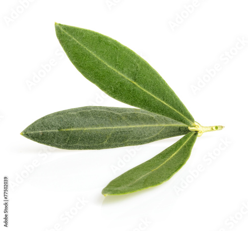Fotobehang Olijfboom olive leaves with shadow isolated on white