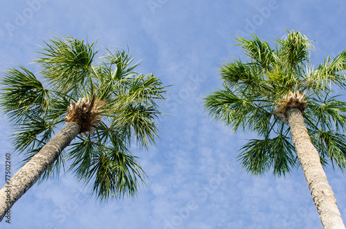 Fotobehang Caraïben Two palms