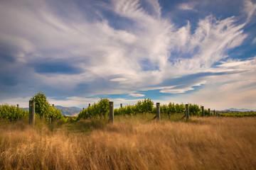 new zealand vineyard near Blenheim long exposure