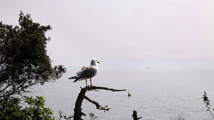 Shot of the seagull seatting on the branch