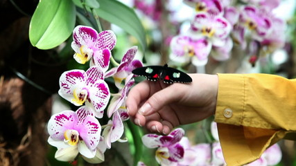 Colorful butterfly on a hand near beautiful orchid's blossom